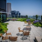 245 Summer Roofdeck Landscape