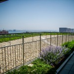 245 Summer Street Roofdeck Landscaping